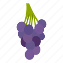 berry, dessert, fruit, grape, healthy, ripe, vine icon
