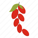 berry, cornel, cornelian, dogwood, fruit, juicy, sweet icon