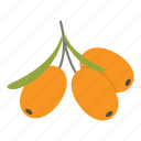 autumn, buckthorn, fruit, ingredient, orange, plant, sea icon
