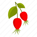 berry, food, fresh, healthy, herbal, rosehip, vitamin icon