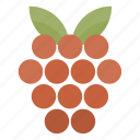 berry, food, fruit, health, raspberry icon