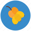 bunch of grapes, wine grapes, fruit, gather grapes, grapes icon