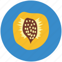 apricot, food, fruit, half apricot, healthy food, nutrition icon