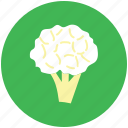 broccoli, cabbage, cauliflower, food, vegetable icon