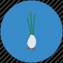 diet, food, nutrition, root vegetable, turnip, vegetable, white turnip icon
