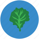 food, green leaf, healthy diet, spinach, vegetable, vegetarian food icon