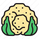 cauliflower, diet, fruit, oragnic, vegetable icon