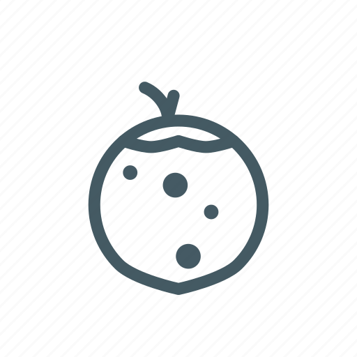 Coconut, fresh, fruit, market, tree, water icon - Download on Iconfinder