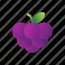 blackberry, berry, fresh, fruit, healthy, sweet, juicy