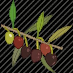 flavor, olive, olive oil, olive tree, olives icon