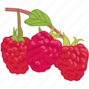 berrys, flavor, fruit, raspberries, raspberry icon