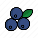 berry, blueberry, food, fresh, fruits, organic, vegan
