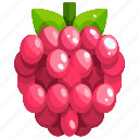 raspberry, healthy, fruit, food, fruits