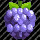 blackberry, food, fruit, fruits, healthy
