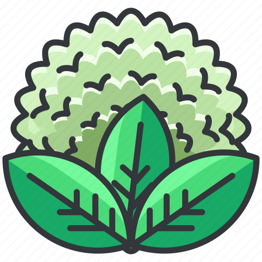 cauliflower, food, health, organic, vegetable icon