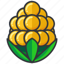 corn, crop, food, health, organic, vegetable icon