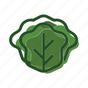 cabbage, food, lettuce, meal, plant icon