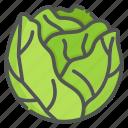 cabbage, vegetarian, vegetable, organic