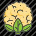cauliflower, vegan, vegetable, healthy