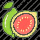 guava, fruit, tropical, fresh