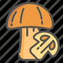 mushroom, toadstool, mushrooms, vegetable
