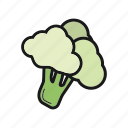 broccoli, cabbage, cauliflower, vegetable icon