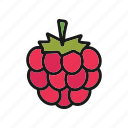 berry, blackberry, bramble, dewberry, raspberry icon