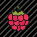 berry, blackberry, bramble, dewberry, raspberry