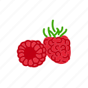 farm, food, fruit, nature, organic, raspberry icon