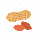 farm, food, fruit, nature, organic, peanut icon