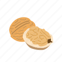 food, kernel, nut, nut shell, nuts, walnut icon