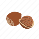 food, hazelnut, kernel, nut, nut shell, nuts icon