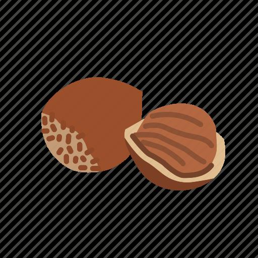 food, hazelnut, kernel, nut, nut shell, nuts icon