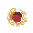 chestnut, food, kernel, nut, nut shell, nuts icon