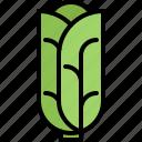 cabbage, food, salad, shop, supermarket, vegetable, vegetables