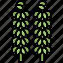 brussels, food, shop, sprouts, supermarket, vegetable, vegetables