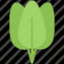 food, leaf, shop, spinach, supermarket, vegetable, vegetables