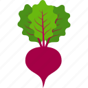beet, beetroot, beets, leaves, sugar, vegetable, radish