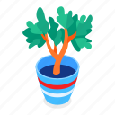 plant, potted, domestic, home
