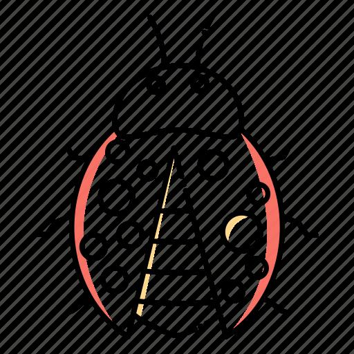 Beetle, bug, garden, insect, ladybird, ladybug icon - Download on Iconfinder