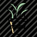 aloe, leaves, plant, succulent, vera