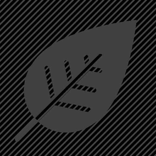 eco, leaf, nature icon