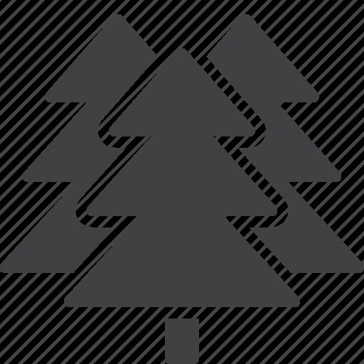 cedar, fir, spruce, tree icon