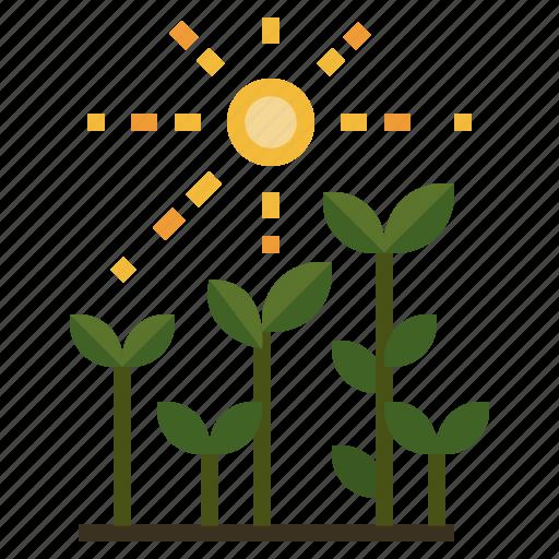 gardening, growing, sunbeams, sunlight, sunny icon