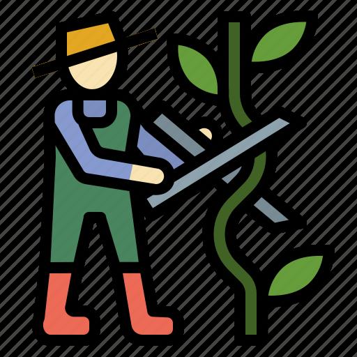 farming, gardening, pruning, scissors, shears icon