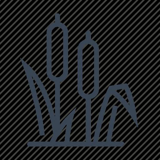 bullrush, plant, reed icon