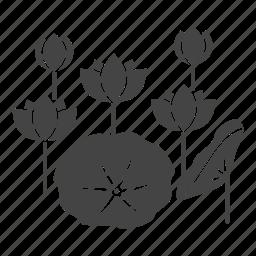 blossom, botanical, flowers, garden, leaves, lotus, nature icon