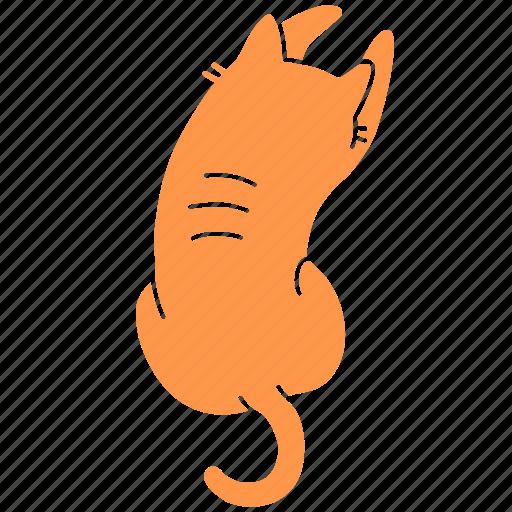 back, cat, cute, feline, ginger, meow, pet icon