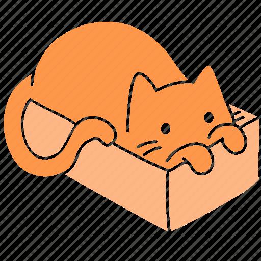 box, cat, cute, feline, ginger, meow, pet icon