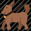 animal, canine, dog, pet, walking your dog